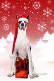 De Deen van Kerstmis Stock Fotografie