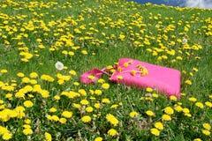 De deken van de picknick in weide Royalty-vrije Stock Fotografie