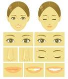De delen van het vrouwengezicht Stock Foto's