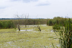De delta van Comana Stock Fotografie