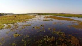 De delta van Donau in motie