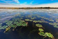 De Delta van Donau, Roemenië Royalty-vrije Stock Afbeelding
