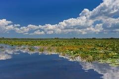 De Delta van Donau, Roemenië Stock Foto's