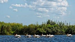 De de Deltavogels en installaties van Donau royalty-vrije stock afbeelding