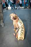 De demonstratie tegen perreras Milaan kan 8 2011 Royalty-vrije Stock Foto
