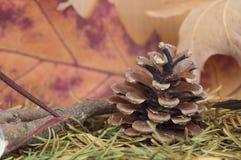 De denneappel die door bladeren van de de herfst de droge spar, esdoorn wordt omringd gaat weg en vertakt zich Stock Afbeelding