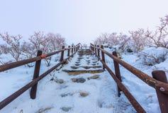 De Deogyusanbergen wordt behandeld door sneeuw stock fotografie