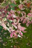 De details van de herfst ideal voor verfraait het huis of het bureau Eenzame mooie herfstboom en groen gras Royalty-vrije Stock Foto's