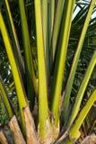 De Details van de Steel van de palm Royalty-vrije Stock Foto