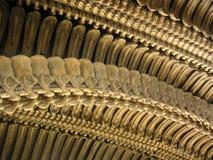 De details van de stekel Royalty-vrije Stock Foto