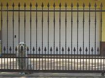 De deur van het ijzer Stock Fotografie