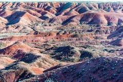 21 de dezembro de 2014 - floresta hirto de medo, AZ, EUA Imagem de Stock