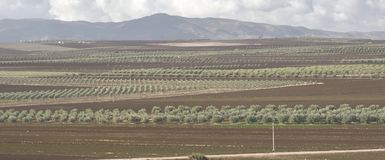 12 de dezembro de 2017, Volubilis, Marrocos Linhas de Olive Groves Are Seen From o local de Roman Ruins de Volubilis perto de Mek Foto de Stock