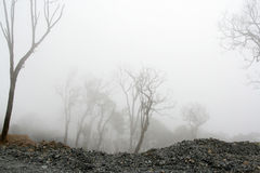 De dichte mist bij desolated bos Royalty-vrije Stock Fotografie