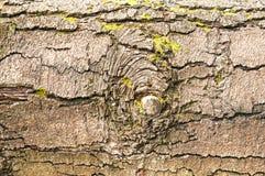 De dichte omhooggaande achtergrond van de boomschors Stock Fotografie