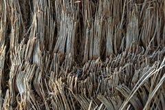 De dichte omhooggaande textuur van de boomboomstam met een zwart ei Royalty-vrije Stock Fotografie