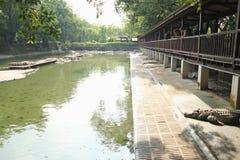 10 de diciembre de 2016 cocodrilos que descansan en la granja del cocodrilo y el movimiento del turista Fotos de archivo libres de regalías