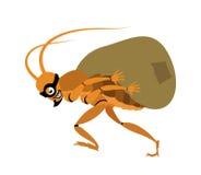 De dief van de kakkerlak Stock Foto