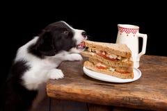 De dief van de sandwich Stock Afbeelding