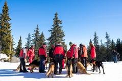 De Dienstredders van de bergredding met reddingshonden Royalty-vrije Stock Fotografie