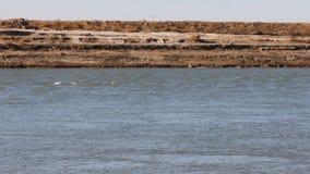 De diepe blauwe golven van het meerwater stock video