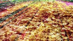 De diepe Forest Fairy Tale Scene-3D zonsopgang geeft terug stock footage