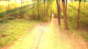 De diepe Forest Fairy Tale Scene-3D zonsopgang geeft terug stock illustratie