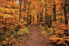 De diepe herfst in bos Royalty-vrije Stock Foto