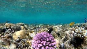 De diepte van de oceaan Coral Reef stock videobeelden