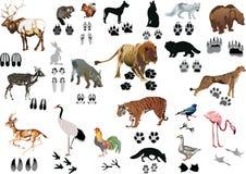 De dieren en de sporen van de kleur Stock Afbeeldingen
