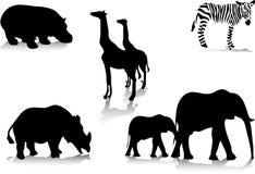 De dieren van Africas Stock Fotografie