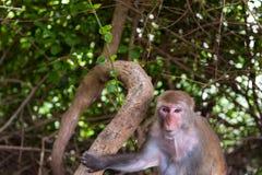De dieren van Azië Stock Fotografie