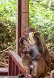 De dieren van Azië Royalty-vrije Stock Foto