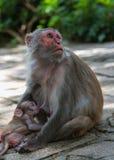 De dieren van Azië Royalty-vrije Stock Afbeeldingen