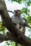 De dieren van Azië Royalty-vrije Stock Afbeelding