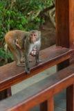 De dieren van Azië Royalty-vrije Stock Foto's