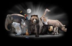De Dieren van de dierentuin bij Nacht met Zwarte Achtergrond Stock Foto's