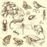 De dieren van de tuin Stock Foto's