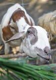 De dieren van Feedding Royalty-vrije Stock Afbeeldingen