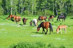 De dieren van het huis Royalty-vrije Stock Fotografie