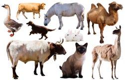 De dieren van het inzamelingslandbouwbedrijf Stock Foto