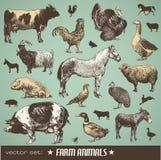 De dieren van het landbouwbedrijf Stock Afbeelding