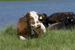 De dieren van het landbouwbedrijf stock foto