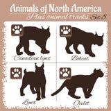 De dieren van Noord-Amerika en dierlijke sporen, voetafdrukken Stock Foto