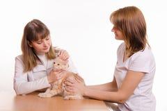De dierenarts onderzoekt kattenoren Stock Foto