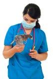 De dierenarts van de arts met kuiken in motie royalty-vrije stock afbeelding