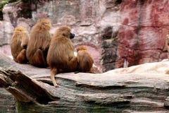 In de dierentuin royalty-vrije stock foto