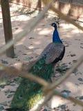 de dierentuin van Bangladesh Royalty-vrije Stock Afbeeldingen