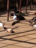de dierentuin van Bangladesh Royalty-vrije Stock Fotografie