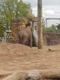 De dierentuin van Chester stock afbeeldingen